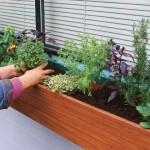 الزراعة في المنزل - 245440