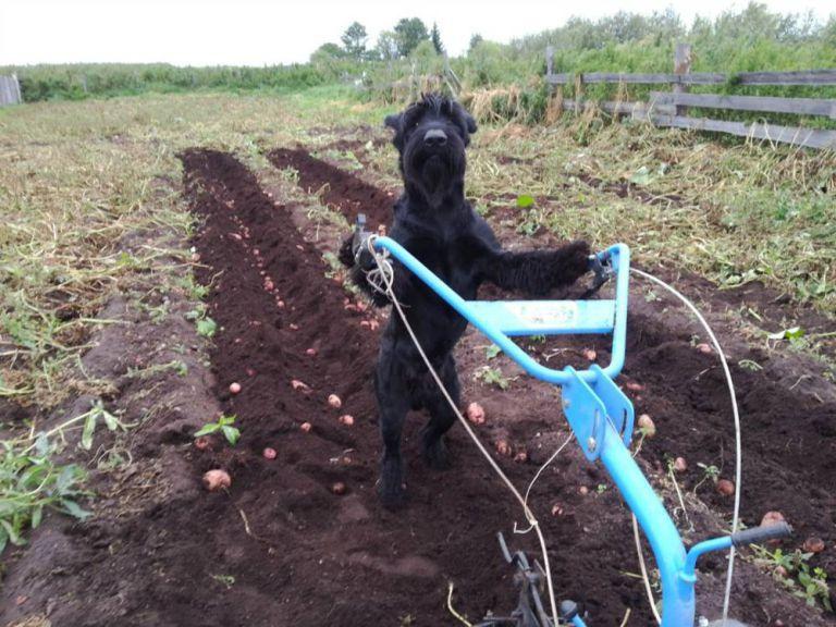 يحصل مزراع