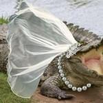 """شاهد  """" فيديو """" الزواج من تمساح ..!!"""