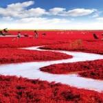 شاطئ البحر الأحمر بالصين - 255227