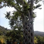 شجرة مفرغة - 255222