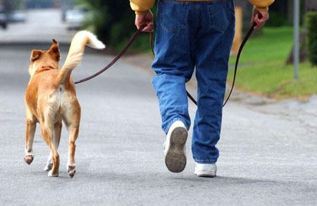 ممشي الكلاب