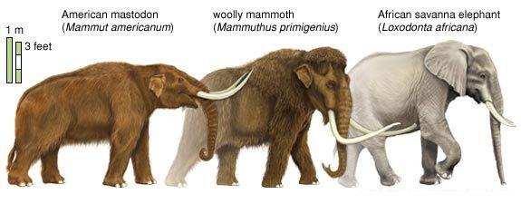 الماموث والفيلة