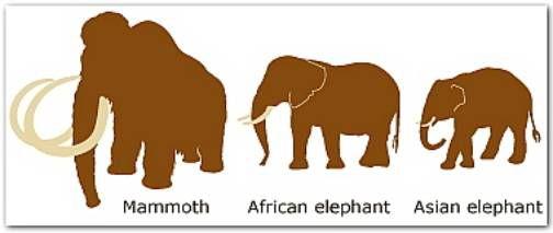 الفيلة وحيوان الماموث