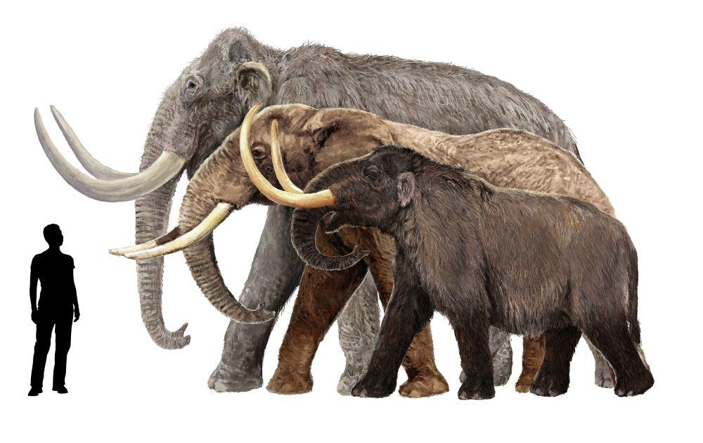 الماموث والفيلة الحديثة