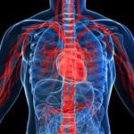 اساليب و طرق حديثة لـ تنشيط الدورة الدموية