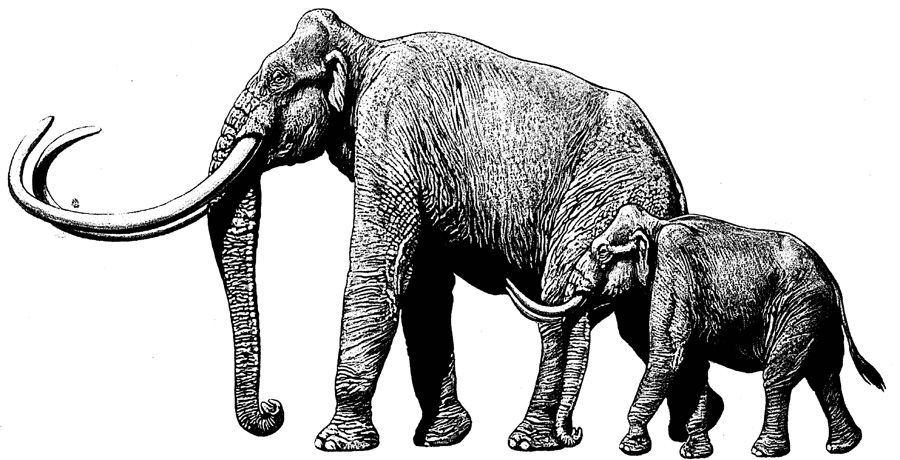Mammoth vs. Elephant