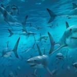 """أسماك القرش ما لا تعرفه عنها """" فيديو """""""