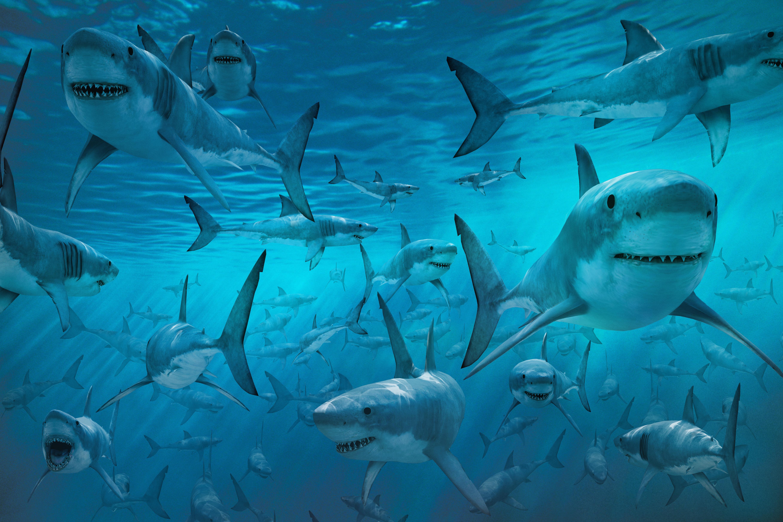 Тамара акулова биография фото