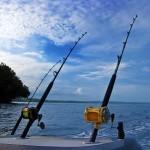 مشاهدة فيديو صيد الاسماك