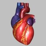 اعراض و اسباب التهاب صمامات القلب