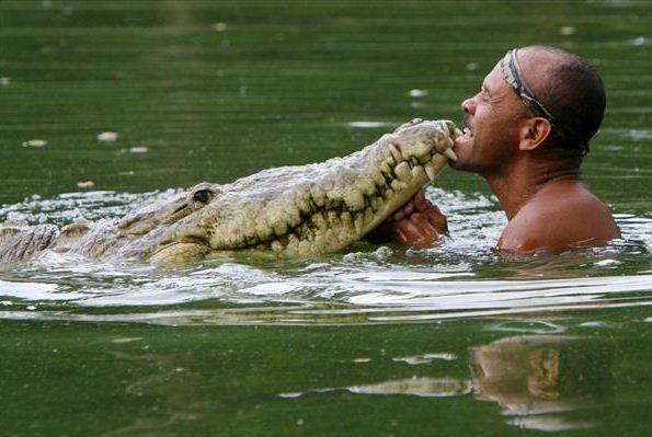 الصياد شيتو والتمساح بوكو