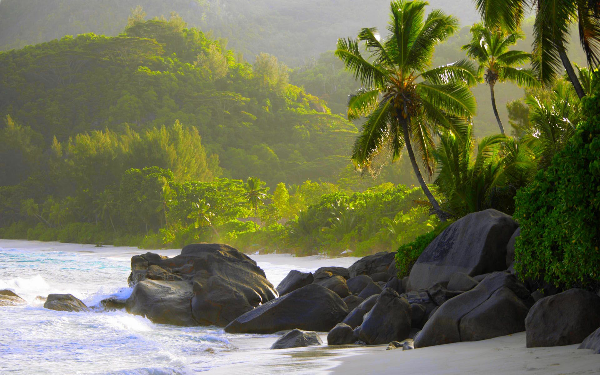 Rocks and palm trees along shore