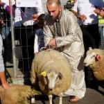 بلجيكا منعت المسلمين من ذبح الأضاحي على الطريقة الإسلامية