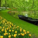 Keukenhof Garden - 269106