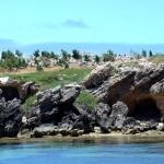 جزيرة البطريق