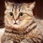 شاهد رد فعل القطط عندما تشاهد الخيار