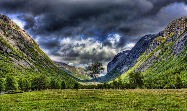 Tree in a Valley