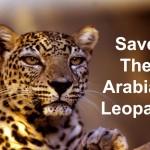 كيفية حماية النمر العربي من الانقراض