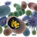 مراحل تطور نظرية الخلية