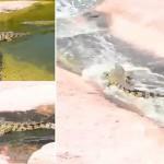 شاهد تماسيح تعشق التزلق بحديقة حيوان المغرب
