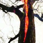 شاهد شجرة تحرق بدون دخان