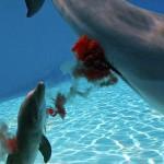 """لحظة ولادة الدلفين ثم السباحة مباشرة """" فيديو """""""