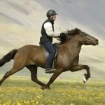 Horseback riding - 300265