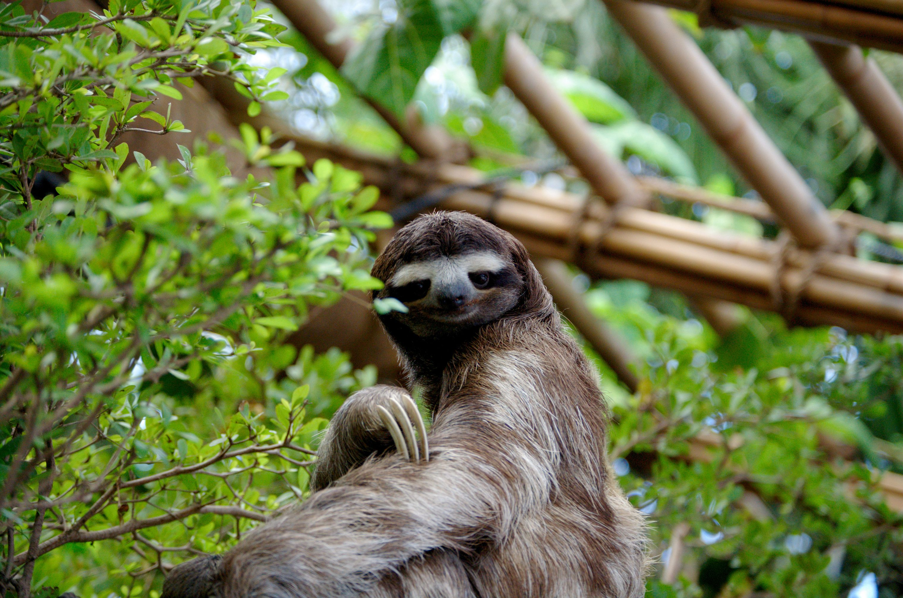 Sloths spend most of their time sleeping