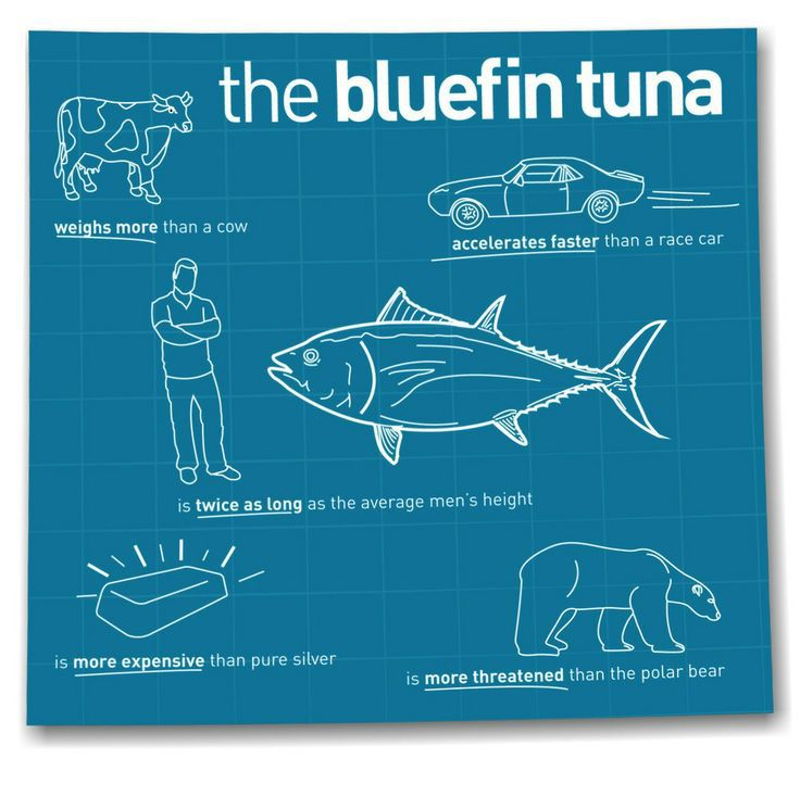 Tuna is a large fish