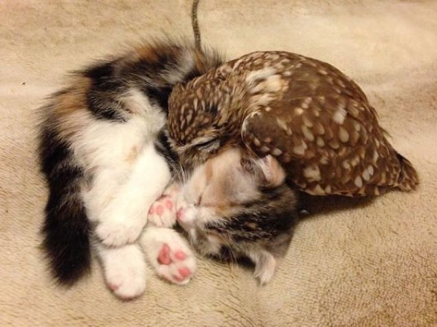 Beautiful Friendship between Cat and an Owl