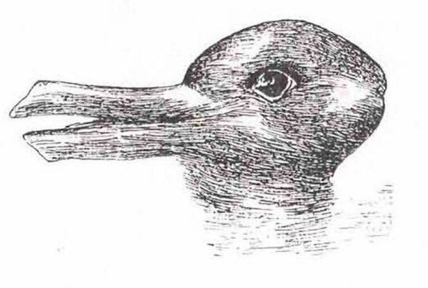 optical duck