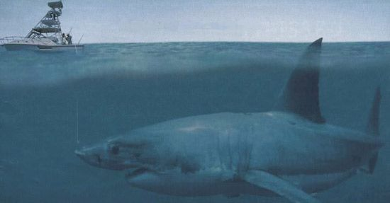 the wonder known as the megalodon