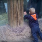 فيديو مضحك : طفل يلعب مع غوريلا صغيرة