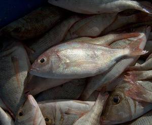 افضل انواع السمك للشوي ANDAQ.jpg