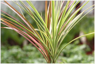 أفضل النباتات المنزلية لتنقية الهواء DARSIN.jpg