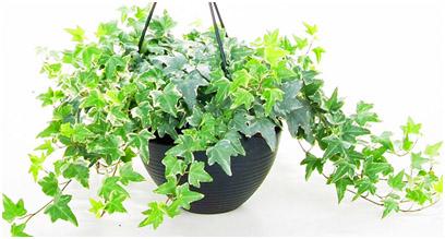 أفضل النباتات المنزلية لتنقية الهواء LIBLAB.jpg