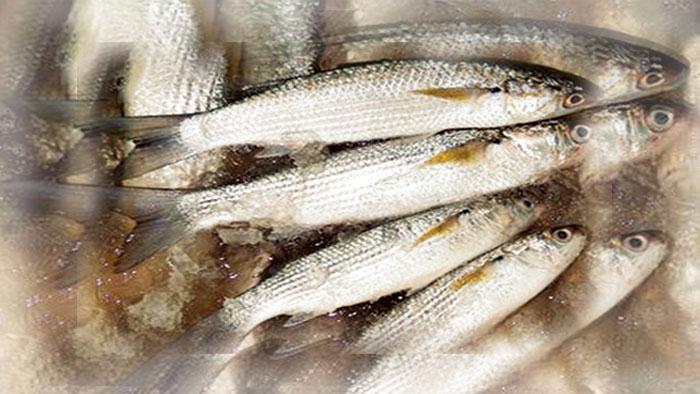 افضل انواع السمك للشوي MED.jpg