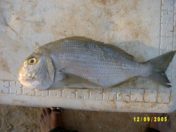 افضل انواع السمك للشوي QARQFAN.jpg