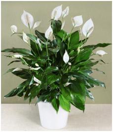 أفضل النباتات المنزلية لتنقية الهواء ZENBAQ.jpg