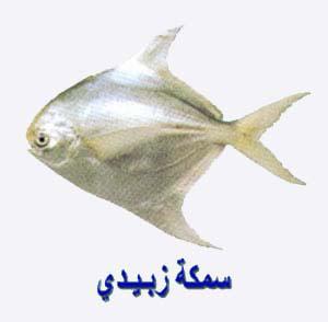 افضل انواع السمك للشوي ZOBADY.jpg