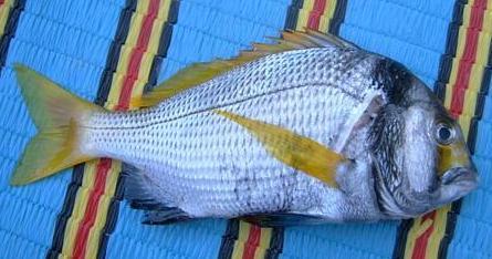 افضل انواع السمك للشوي fskr.jpg