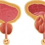 طريقة فحص البروستاتا وانواع الامراض التي تصيبها