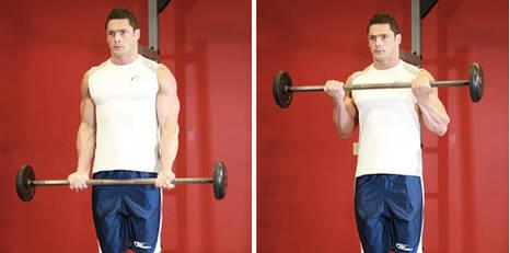 تمرين العضلة ذات الرأسين