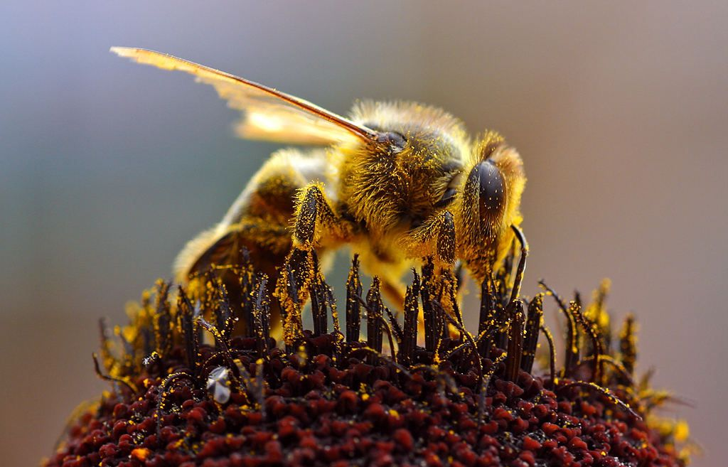 Bees work from sunrise to sunset