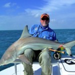 Black tip sharks survive - 325132