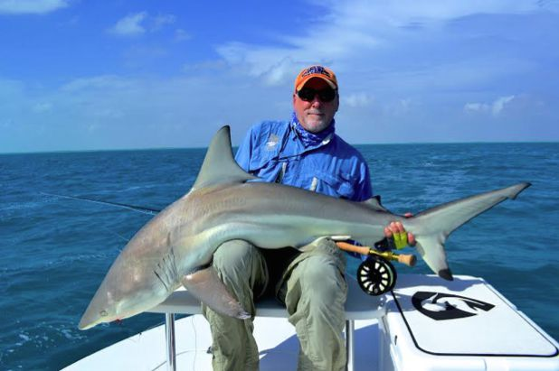 Black tip sharks survive