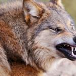 ماهو الحيوان الذي اتهم كذبا في احدى قصص الانبياء
