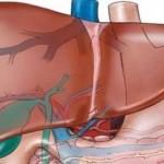 تعرف على وظائف الكبد المتعددة في جسم الإنسان