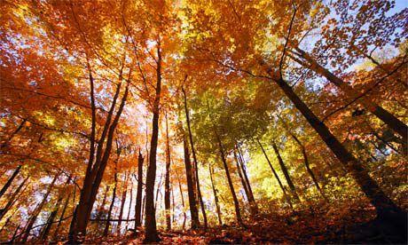 اين تقع الغابات المتساقطة الاوراق